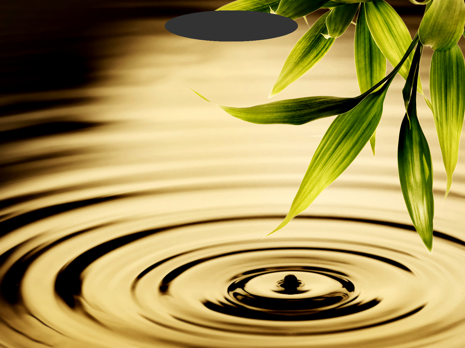 Water-Ripples-and-Greenery-2.png